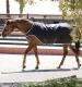 Thumbnail Ausreit- & Führmaschinendecken: Führmaschinendecke Amigo Walker 100g in Black/Silv 1030412402306 von Horseware