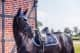 Thumbnail Schabracken: Springschabracke Midnight White  1047579577822 von Equestrian Stockholm
