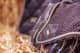 Thumbnail Fliegenohren: Fliegenohren Golden Brown 1072242329385 von Equestrian Stockholm