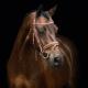 Thumbnail Trensen: Delaware in vintage nougat/silver 1101-00039-vintagenougat/silver von Schockemöhle Sports