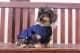 Thumbnail Hund: Hundedecke Glossy (Classic Sports HW 18) in darknavy 153-95-40/014 von Eskadron