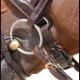 """Thumbnail Trensen: Trense """"classic"""" mit breitem schwedischem Reithalfter in brown (WC) b168-brown von Dyon"""